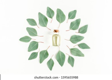 Eucalyptus essential oil, round frame made green leaves eucalyptus populus isolated on white background. Flat lay, top view