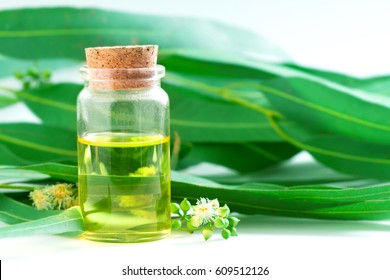 Eucalyptus essential oils in glass bottle ,oganic herbal aromatherapy concept