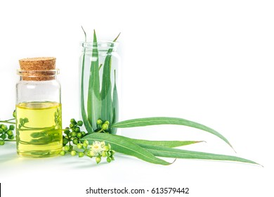 Eucalyptus essential oils in glass bottle ,organic herbal aromatherapy concept
