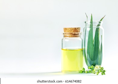 the Eucalyptus essential oils in glass bottle ,organic herbal aromatherapy concept