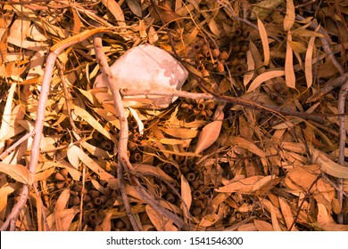 Eucalyptus forest floor covered with fallen dry yellow and orange leaves, sticks and gumnuts