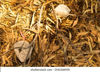 Eucalyptus forest floor covered with fallen dry yellow leaves, sticks, gumnuts and small white stones