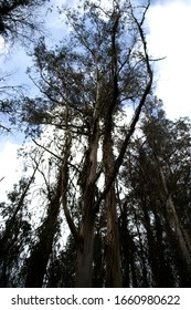 Eucalyptus forest in Paderne, Galicia by Fermín Tamames