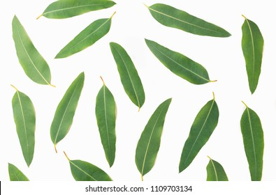 Eucalyptus leaves isolated on white background.top view