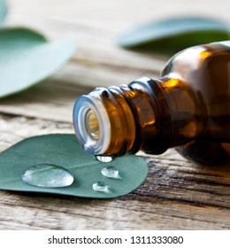 Eucalyptus leaves and oil close up
