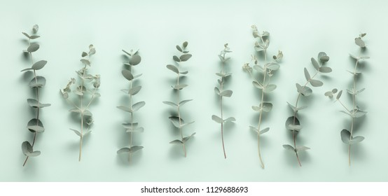 Eucalyptus leaves on green background