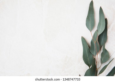 Eucalyptus leaves on marble surface frame flat lay with copy space.