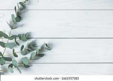 Eucalyptus leaves on white wooden background. Frame made of eucalyptus branches. Flat lay, top view, copy space