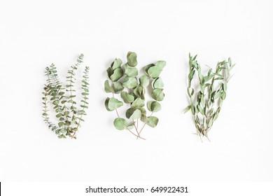 Eucalyptus leaves. Various eucalyptus branches on white background. Flat lay, top view