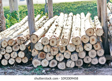 Put Log Images, Stock Photos & Vectors | Shutterstock
