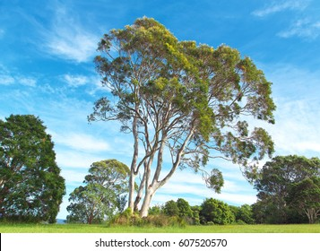 eucalyptus tree and bushes in grassy field