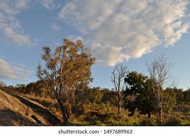 Eucalyptus trees, forest and bushland in late evening.  Whistlepipe Gully Walk, Mundy Regional Park, Kalamunda, Western Australia, Australia