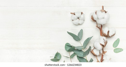 Eucalyptus twigs and cotton flower on white wooden background. Flat lay, top view, copy space. Floral background, flowers composition.