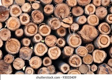 eucalyptus wood log stack