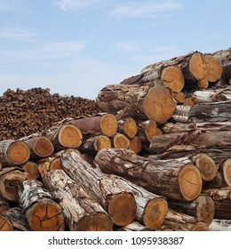 Eucalyptus wood stack for lumber