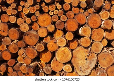 Eucalyptus wood stack for lumber sawing