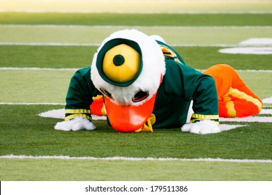 EUGENE, OR - OCTOBER 28, 2006: Oregon duck mascot Puddles doing pushups after each score during the UO vs PSU football game at Autzen Stadium.