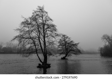 Eugene Trees in River in Black and White with Fog