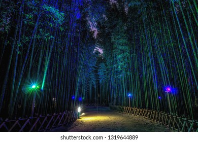 Eunhasu or galaxy road in Taehwagang Simnidaebat bamboo forest field in Ulsan, South Korea. Bamboo forest is lit up at night illuminated by the artificial lights.