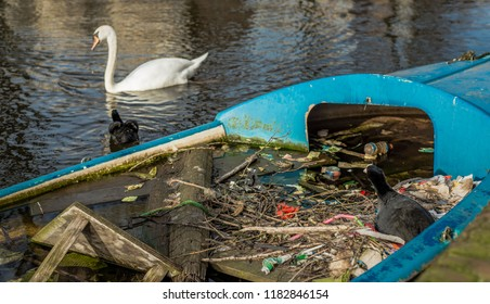 A Eurasian coot watches intently as its partner aggressively defends their nest - built with trash and other human garbage and litter in a half sunk boat in an Amsterdam canal - from a swan.
