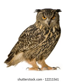 Eurasian Eagle Owl - Bubo bubo (22 months) in front of a white background