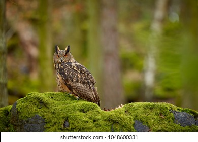 Eurasian eagle owl, Bubo bubo, siting on the rock in the dark forest. Green forest in the background. Wild animal with big orange eyes.