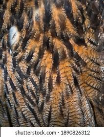 Eurasian eagle-owl  (Bubo bubo) wing feathers