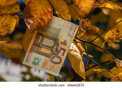 Euro is in fall leaves