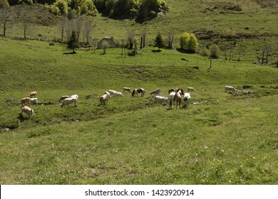 Europe, France, Pyrenees, 2019-06, Horses grazing in a valley in the mountains of French Pyrenees, close to the Plateau of Cambasque and the old cable car ski station of Courbet.