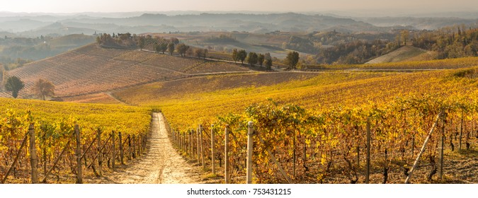 Europe Italy Piedmont, langhe Vineyards near Barolo
