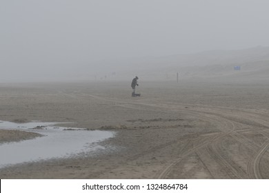 Europe, Netherlands, Noordwijk, 2018, Dogs and walkers on winter beach