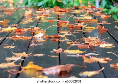 Europe, Romania. Brasov. Rain on boards of walkway, fall color and  leaves. Reflections.