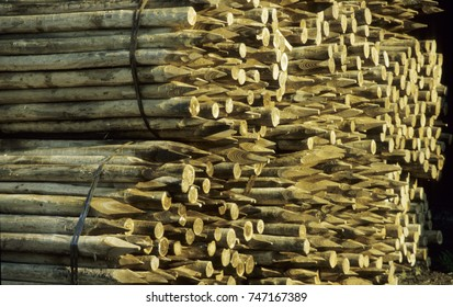 Europe UK Bedfordshire 2000. Industrial wood yard with stacks of new wood poles and wood stakes.