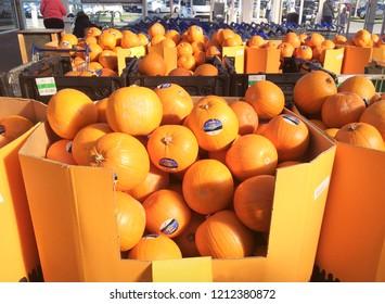 Europe UK Bedfordshire Bedford October 2018. Closeup of big orange pumpkins in boxes. Outside in precinct of Tesco supermarket. Bright and sunshine day.