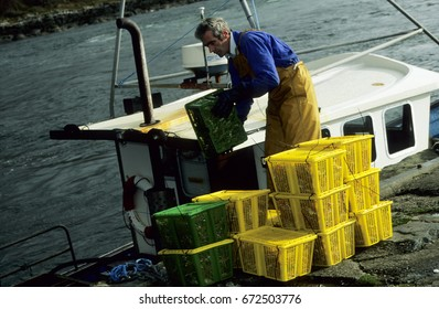 Europe UK Scotland Scottish Highlands Lochaline 1998. Sea fisherman on fishing boat unloading his catch. Yellow lobster crates stacked on quayside. Green crates of fish.