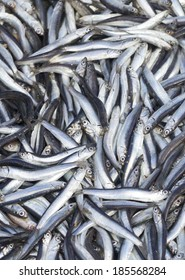 The European anchovy (Engraulis encrasicolus) is a forage fish somewhat related to the herring. Anchovies are placed in the family Engraulidae.