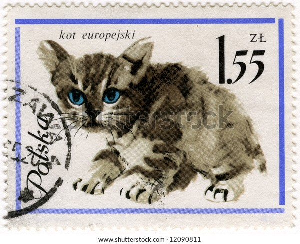 European baby cat on a vintage, canceled post stamp from Poland