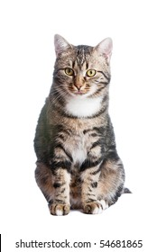 European cat in front on a white background with tongue out