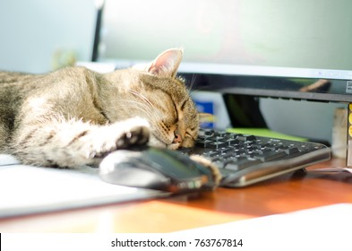 European cat sweetly and carefree asleep on a black keyboard and a large screen with a paw on the mouse