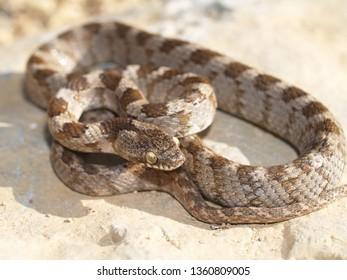 Snakebite Images, Stock Photos & Vectors | Shutterstock