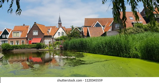 European city in Netherland with a family of swams