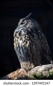 European eagle owl on a tree trunk with closed eyes