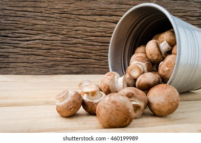 European food concept mushroom soup with champignon set up with brown background. Champignon mushroom or Button mushroom they are available year-round. Can be made a soups, salads or eaten raw.
