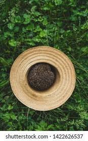 European forest hedgehog in hat