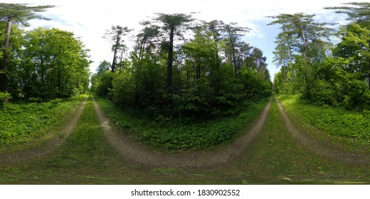 European Forest in Summer HDRI Panorama