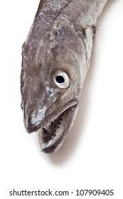 European Hake fish-Merluccius merluccius isolated on a white studio background.