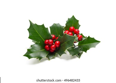 European Holly (Ilex aquifolium) leaves and fruit