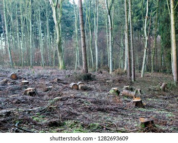 European mixed Forest with numerous cut down trees