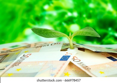 European money, green sprout on a close-up background