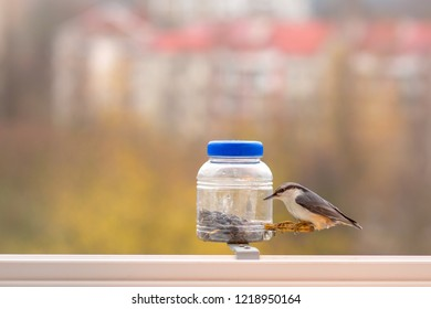 European nuthatch Sitta europaea - at the bird feeder. Caring for birds in the cold period. The nuthatch takes the seeds from the feeder. Bright blurred background. Wintering bird